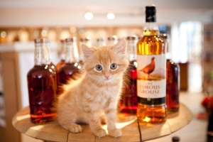 The-Famous-Grouse-distillery-cat